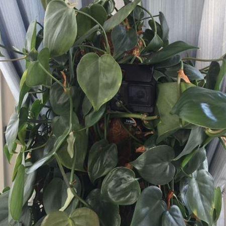Picture of Hidden GoPro